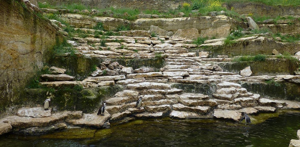 doué la fontaine chute d'eau pingouin vente fabrication pierre naturelle calminia